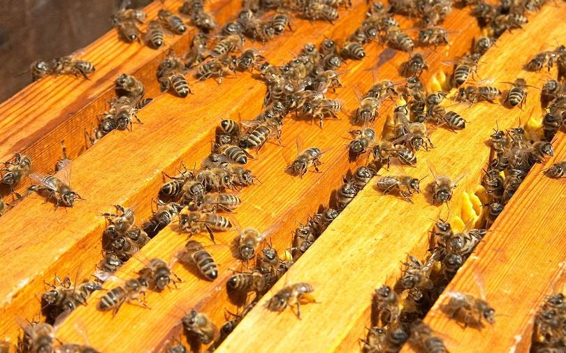 Жизнь пчел в улье на подставке протекает очень интересно для знающего человека