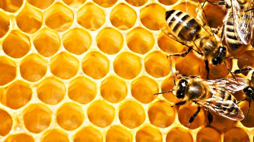 Всё, что нужно для пасеки и пчеловодства