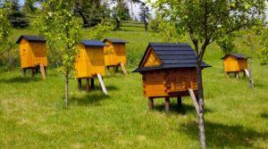 Как лечить пчел от клещей