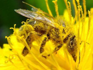 Препараты для пчёл в борьбе с варроатозом