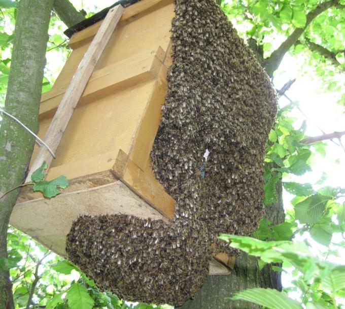 Роеловки для пчел