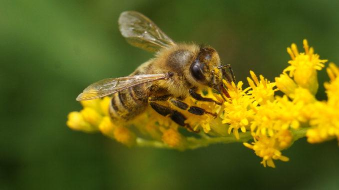 Лечение пчел - препараты и инструкции