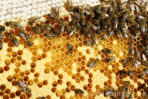 Чем лечат пчел