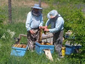 Способы лечения пчел