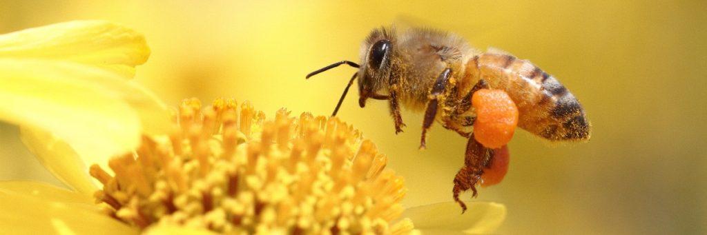 Как клещи вредят пчелам