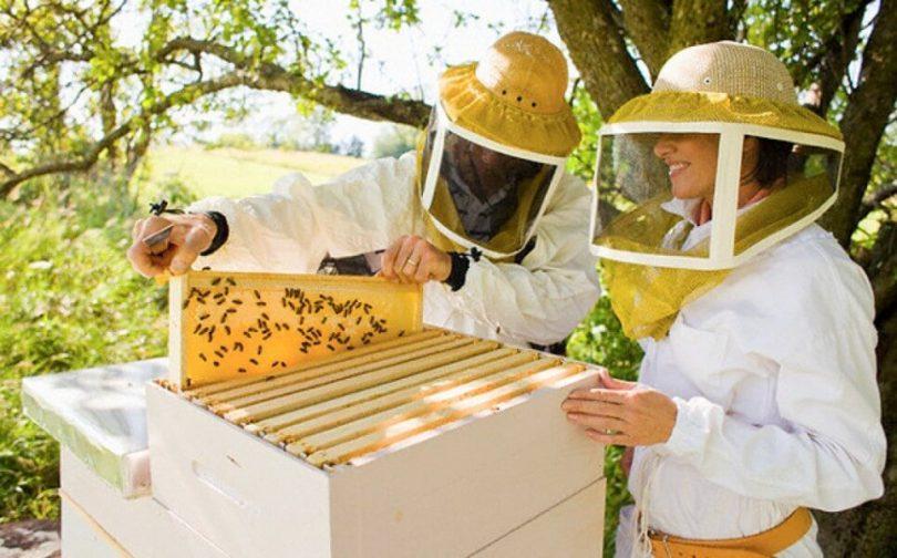 Всё, что нужно приобрести для пасеки и пчеловодства