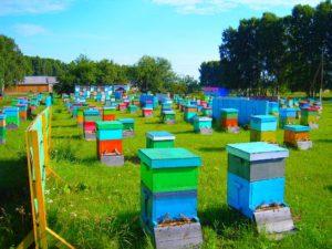 Клещи - враги для пчел