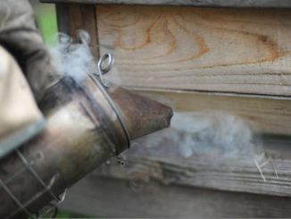 Дымарь для пчел - какой выбрать и как пользоваться