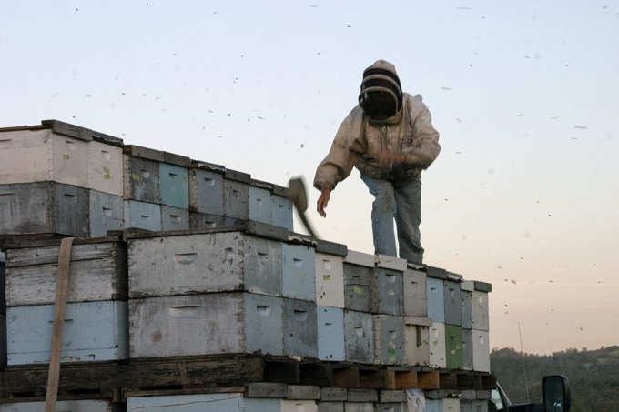 Летковый заградитель Объединенный пчеловодческий форум
