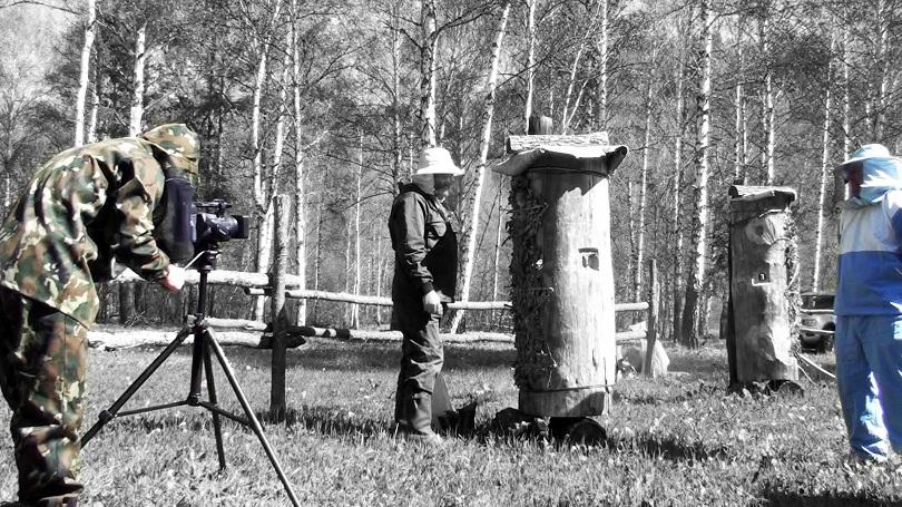 История возникновения пчеловодства в России разорение