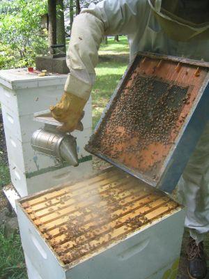 Купите дымарь для окуривания пчел при добыче продуктов пчеловодства