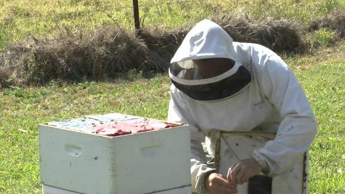 При лечении пчел осенью нужно учитывать возможность заражения улья клещами