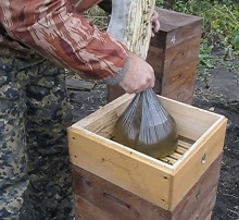 Лечение пчел осенью — процесс не слишком сложный, но необходимый