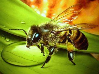 Лечение пчел осенью — залог сохранения сильного улья