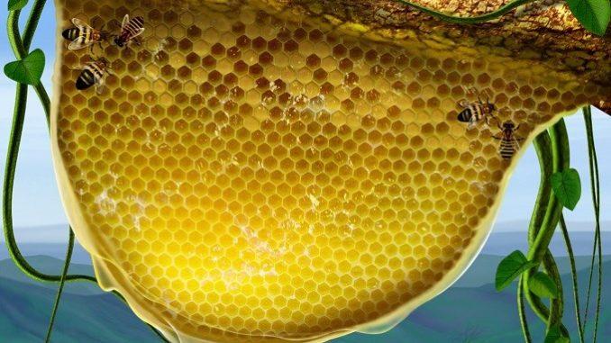 Пчелиные соты активно используются при создании косметики