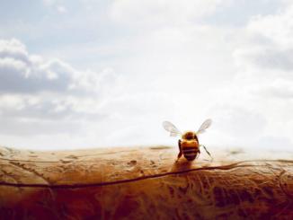 Для мужчин с аллергией на пчел прием помора противопоказан
