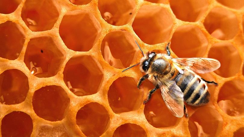 Рефрактометр помогает определить плотность меда в сотах рамки