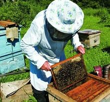 В пчеловодстве самоделки и приспособления — распространенное явление