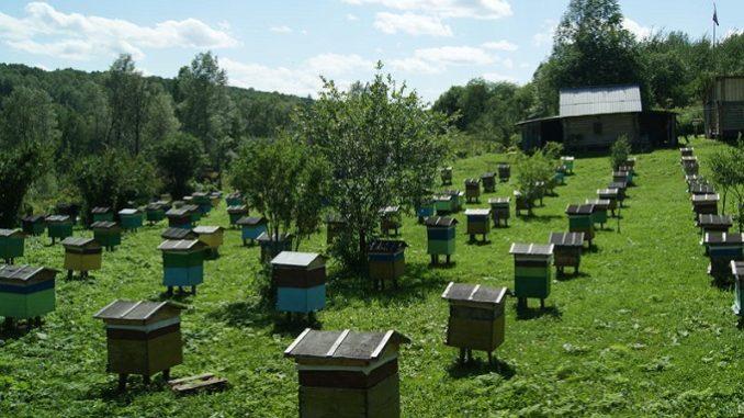 В пчеловодстве очень важно правильно оценивать затраты времени на самоделки и приспособления