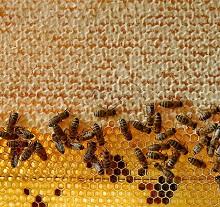 Нет в природе ничего идеальней пчелиных сот