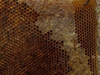 Пчеловодство без вощины: особенности методики