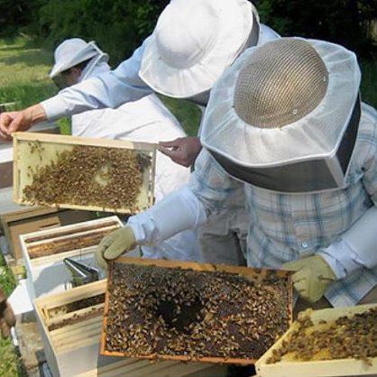 Купите или заготовьте достаточное количество рамок для производства продуктов пчеловодства
