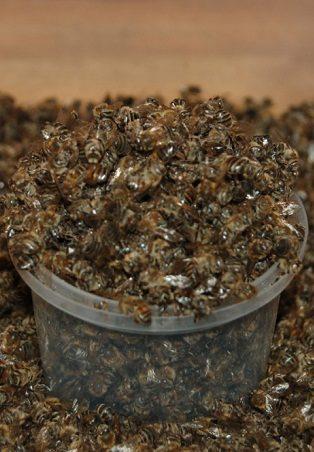 Купить и продать подмор вы сможете в пчеловодческих обществах