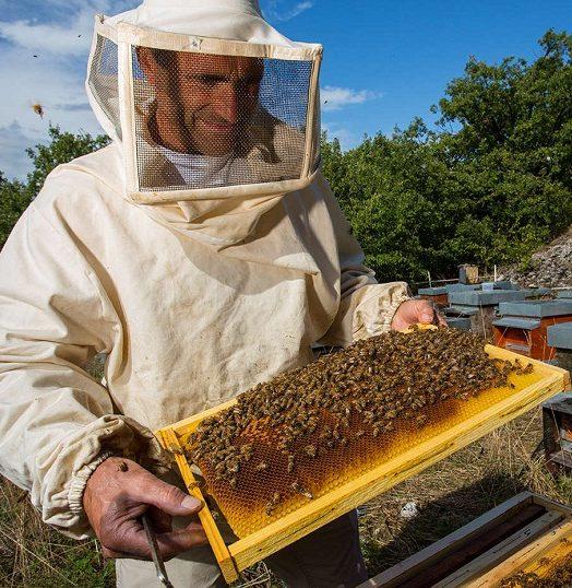 Формирование новых ульев приводит к началу организации бизнеса пчеловодства