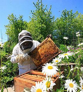 Прежде чем купить пасеку для производства продуктов пчеловодства, определитесь с местом ее установки