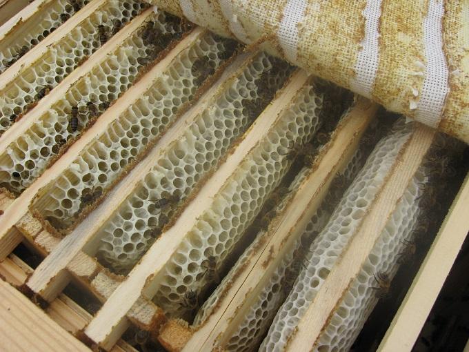Улей в пчеловодстве является основным компонентом