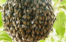 Переселение пчел весной