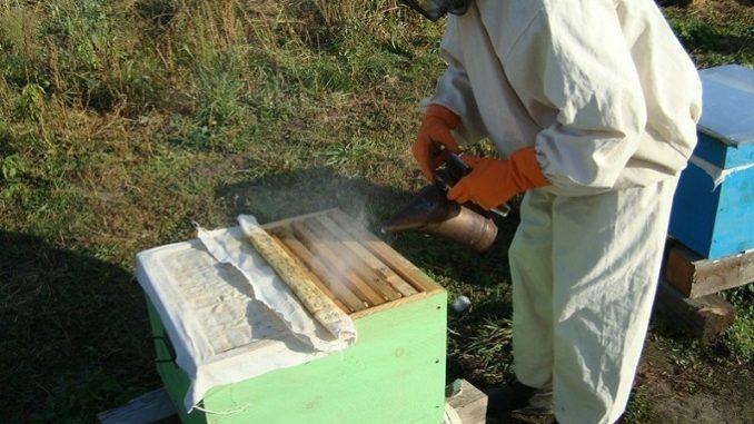 Противороевые методы современного пчеловодства