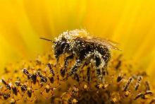 Сбор и хранение пыльцы