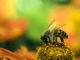 В чём разница между цветочной пыльцой и пергой