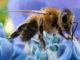 Что нужно знать о метке пчелиных маток