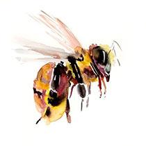 Мертвые пчелы, или как их еще называют - подмор, приносят пользу даже после своей смерти