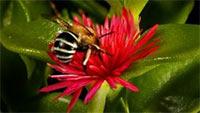В подморе или по другому говоря, теле умершей пчелы находится очень много полезных микроэлементов