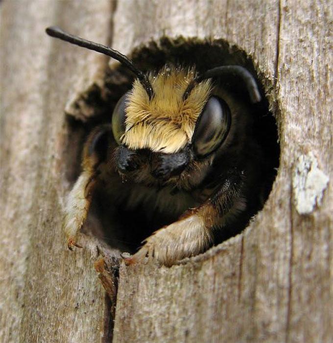 У пчеловодов свои причины, чтобы не создавать мед на основе пыльцы, полученной пчелами с цветков тыквы