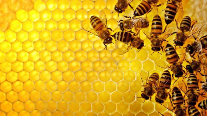 Новые изобретения в пчеловодстве