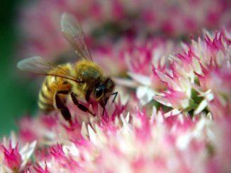 Всё что нужно знать о подкормке пыльцой пчёл