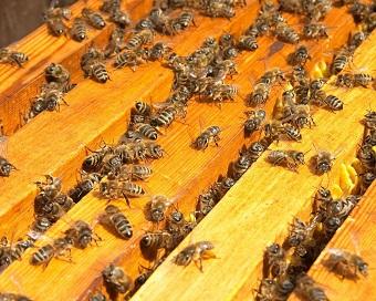 Без улья и пчел невозможно пчеловодство