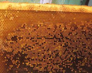 Рамка с продуктами пчеловодства