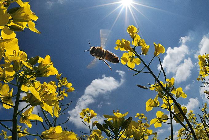 Как формируется цена пчелопакета