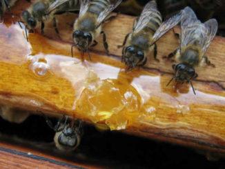 Подкормка пчел сахарным сиропом