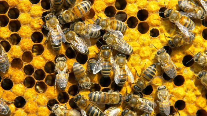 Всё что нужно знать про Бипин для пчёл