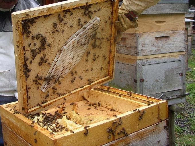 Пчеловодство и улей неразрывны