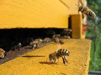 Пчеловодство требует наличия ульев