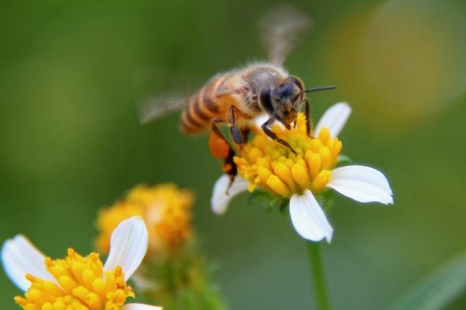 Аллергия на продукты, содержащие мед бывает как врожденной, так и приобретенной