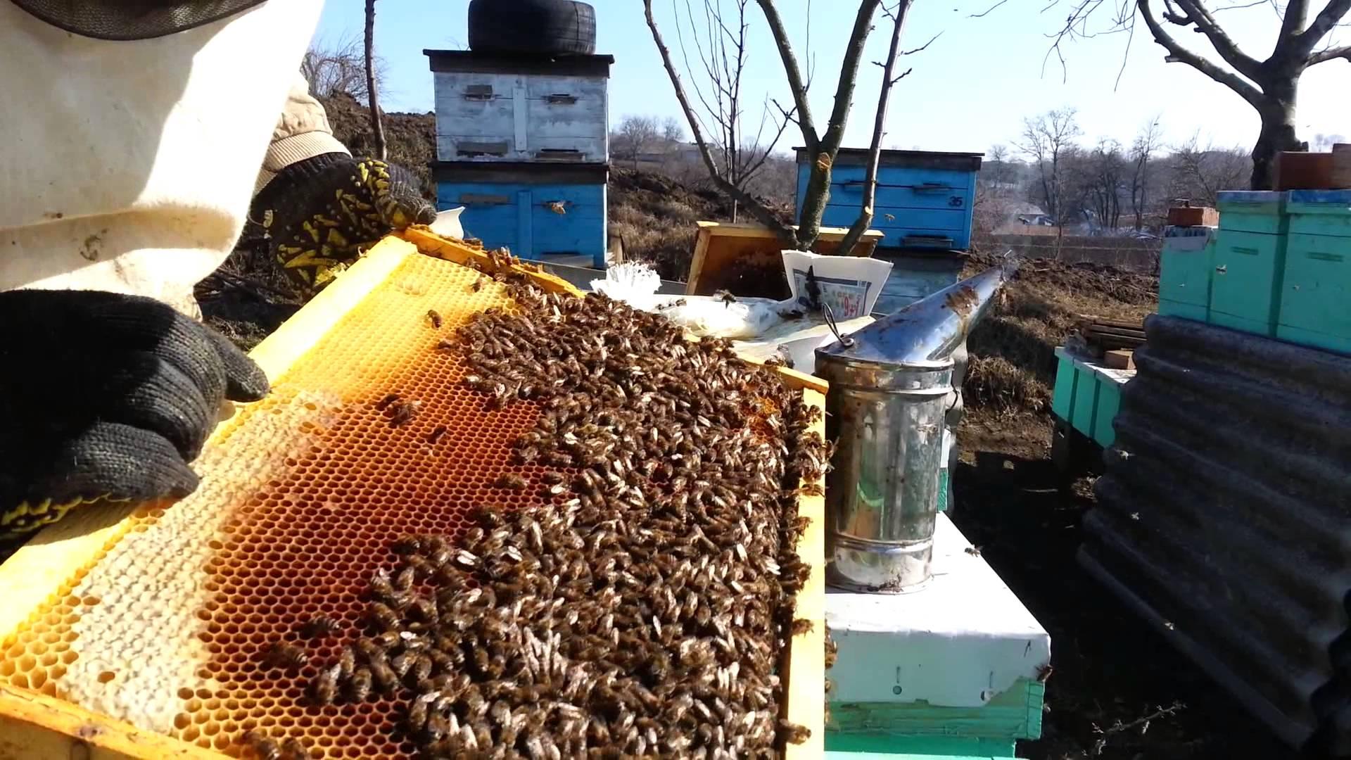 Весенняя обработка и первичный осмотр пчелосемей
