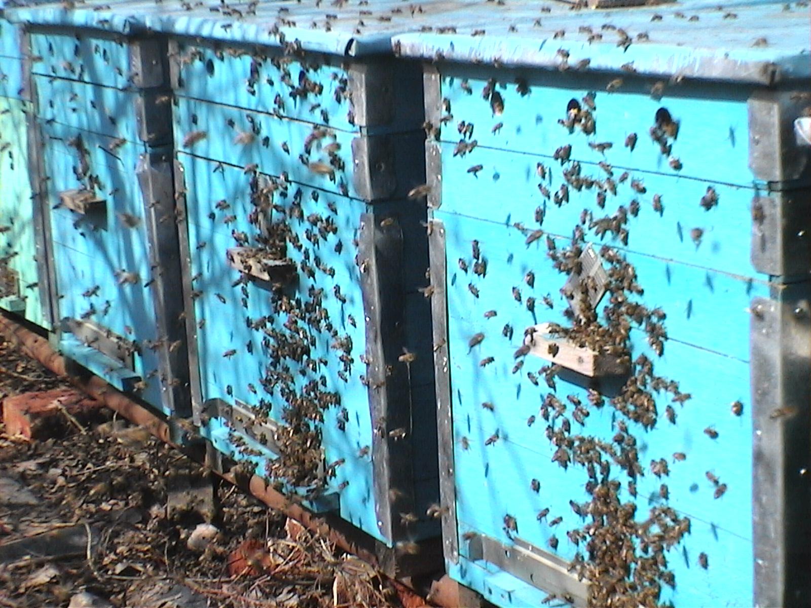 Весенняя обработка и первый облет пчел